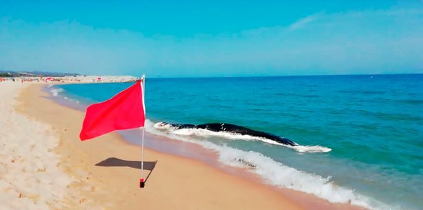 1_PAY-CEN-BeachWhaleStranded-04